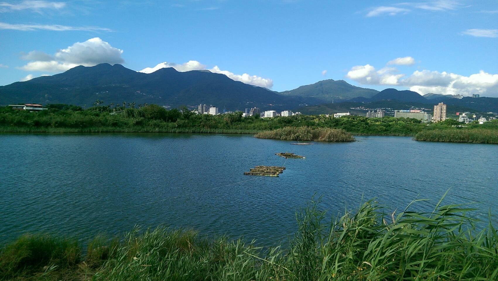 社子島濕地孕育豐富的底棲動物生態相,彈塗魚、招潮蟹與鷺鷥科鳥類都是這裡的主要住民。圖/臺北市政府工務局水利工程處