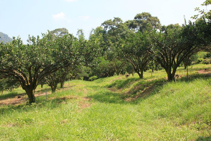 四份水土保持戶外教室總面積約3.7公頃,也是一座觀光果園。圖/四份水土保持戶外教室官網