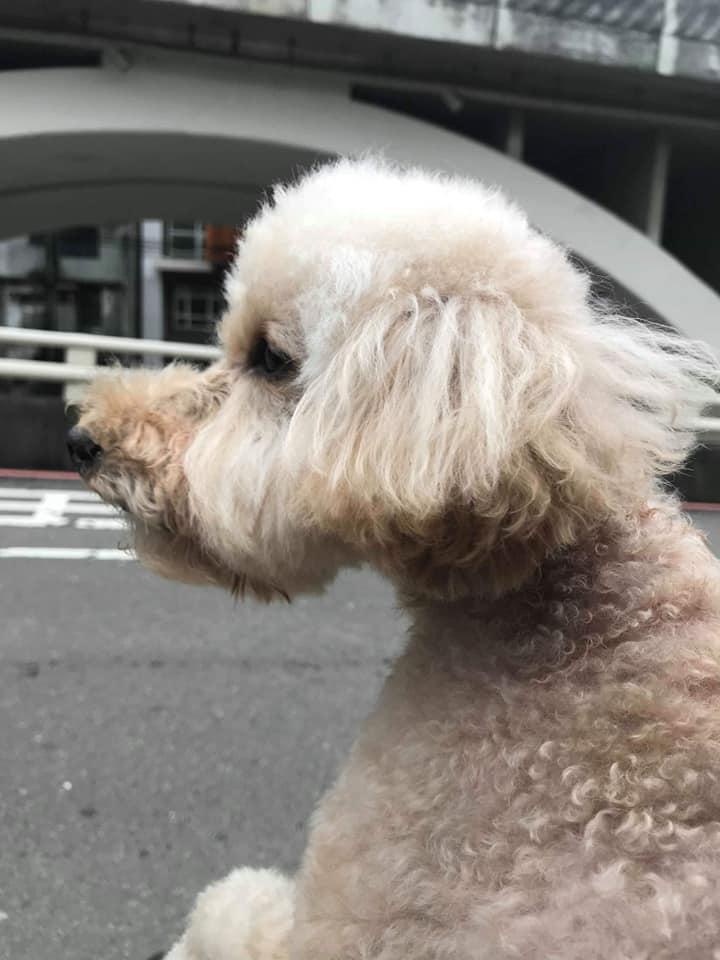 心愛的狗常黏著開車出門的和熙
