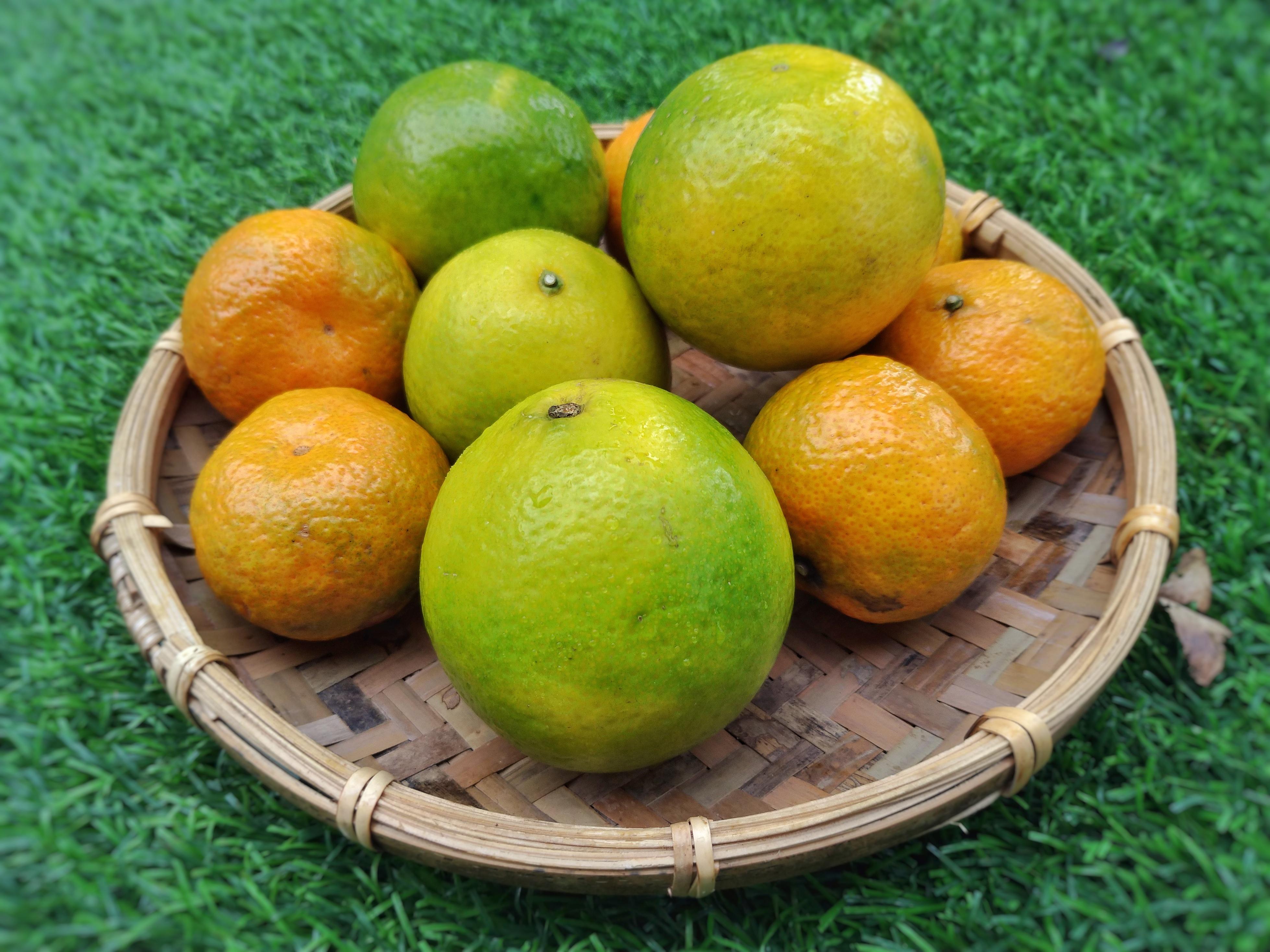 圖/青椪柑外表翠綠口感酸甜