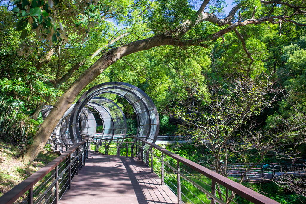 賞芒還能順遊虎頭山公園,行經毛毛蟲花廊隧道、奧爾森林學堂。