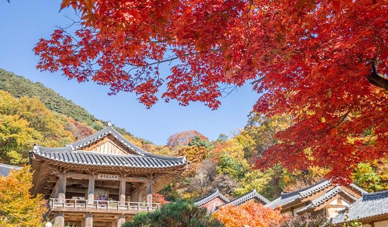韓國十大名剎~浮石寺