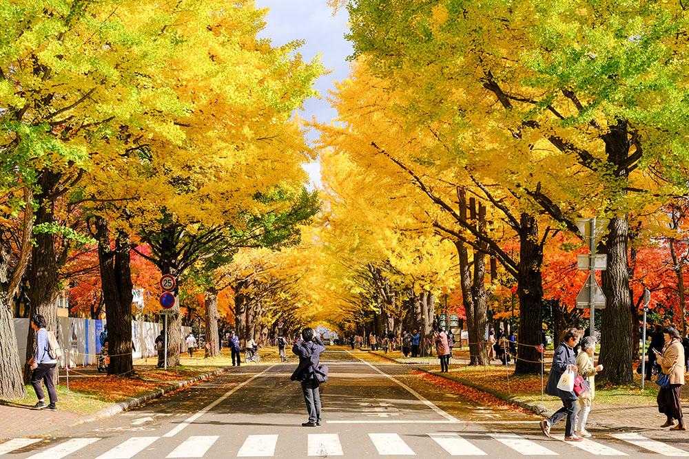 無論是觀光客,還是日本人都拼命拍下眼前美景。
