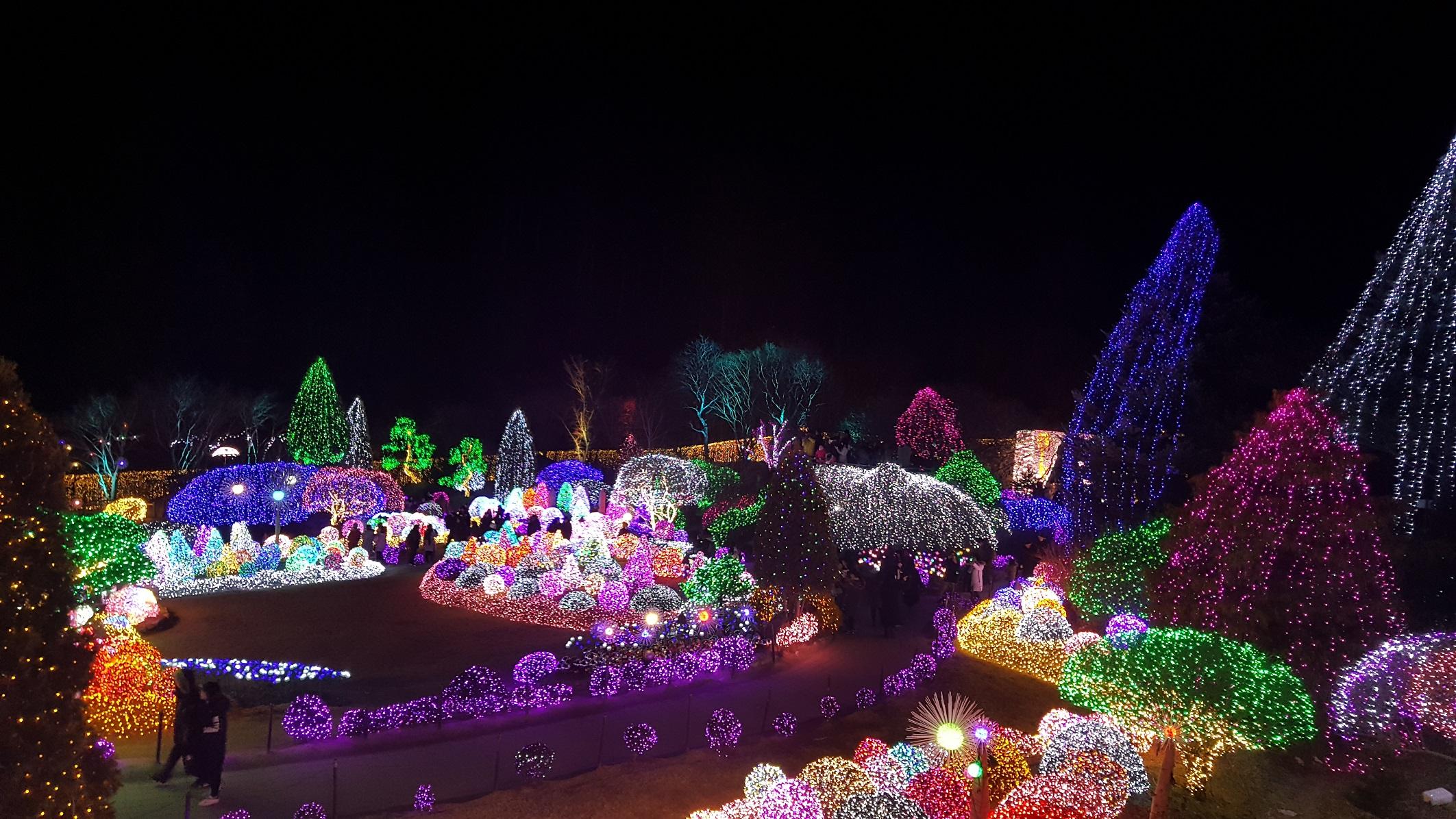 ▲韓國最大的點燈活動就在晨靜樹木園(圖/七逗旅遊網)