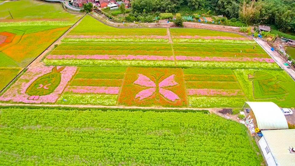 (圖片來源:大溪月眉休閒農業發展協會FB)
