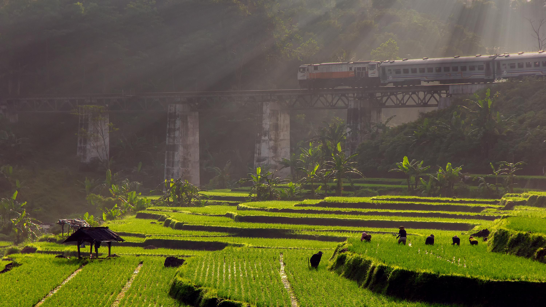 圖10 飛越一片翠綠梯田的景觀列車,讓人搭乘時可飽覽鄉村風光。