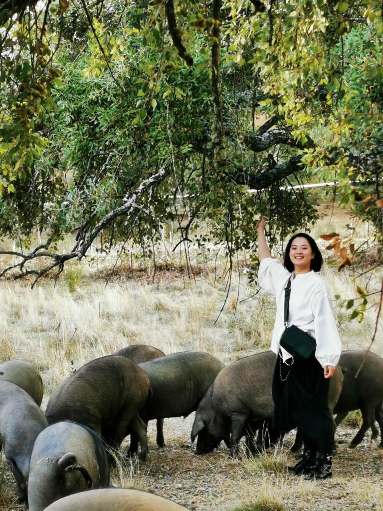 ▲Jabugo地區最出名的就是滿山遍野為了伊比利豬而種的橡樹。