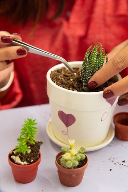 多肉植物體驗課程DIY。攝影/李文欽