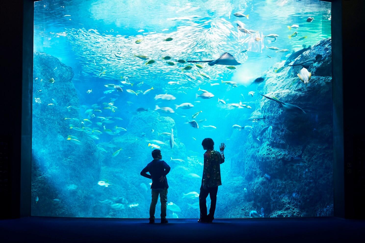 《海獸之子》魅力擄獲米津玄師 電影主題曲4天半破千萬觀看數