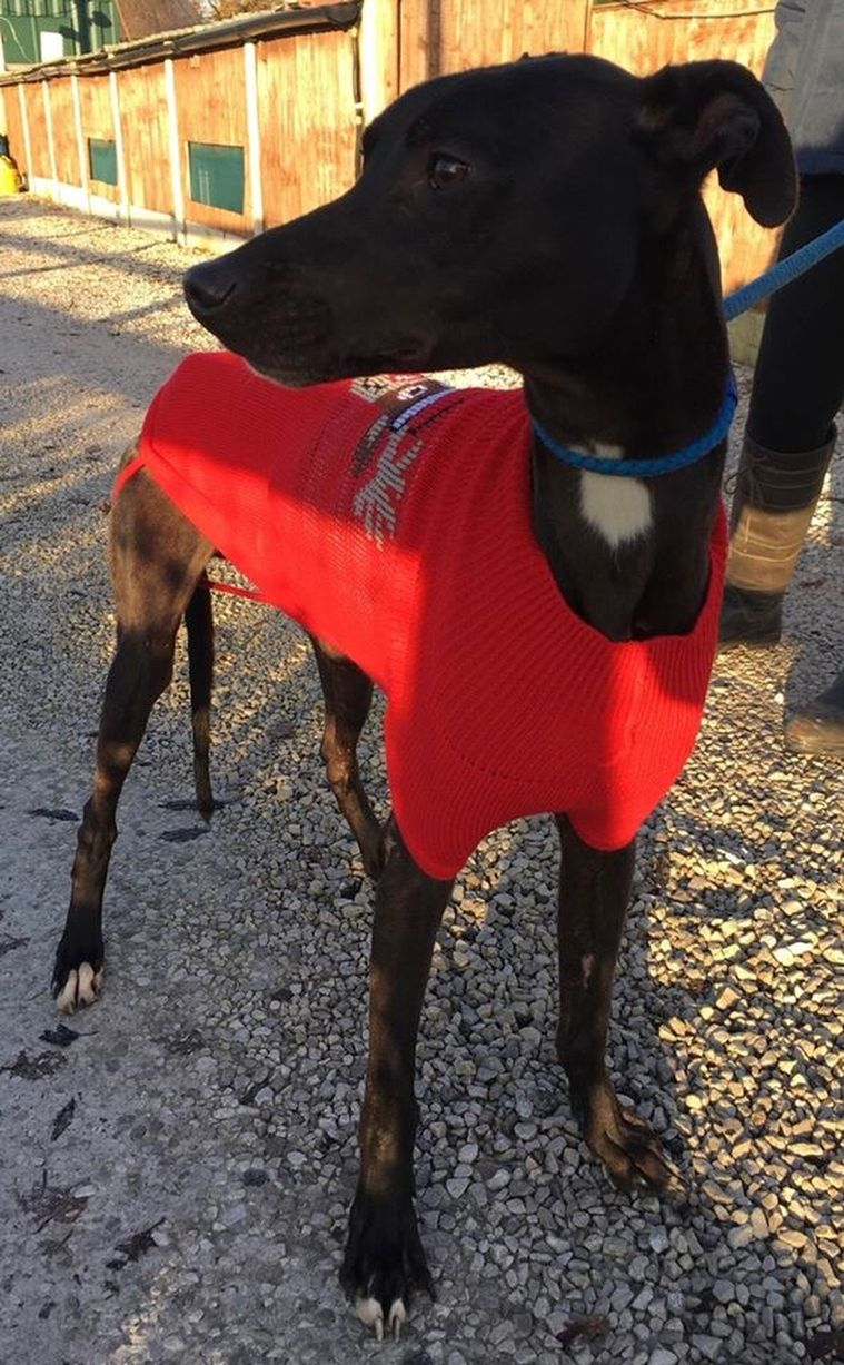 Comet has now found a new home, according to staff (Crowfoot Kennels)