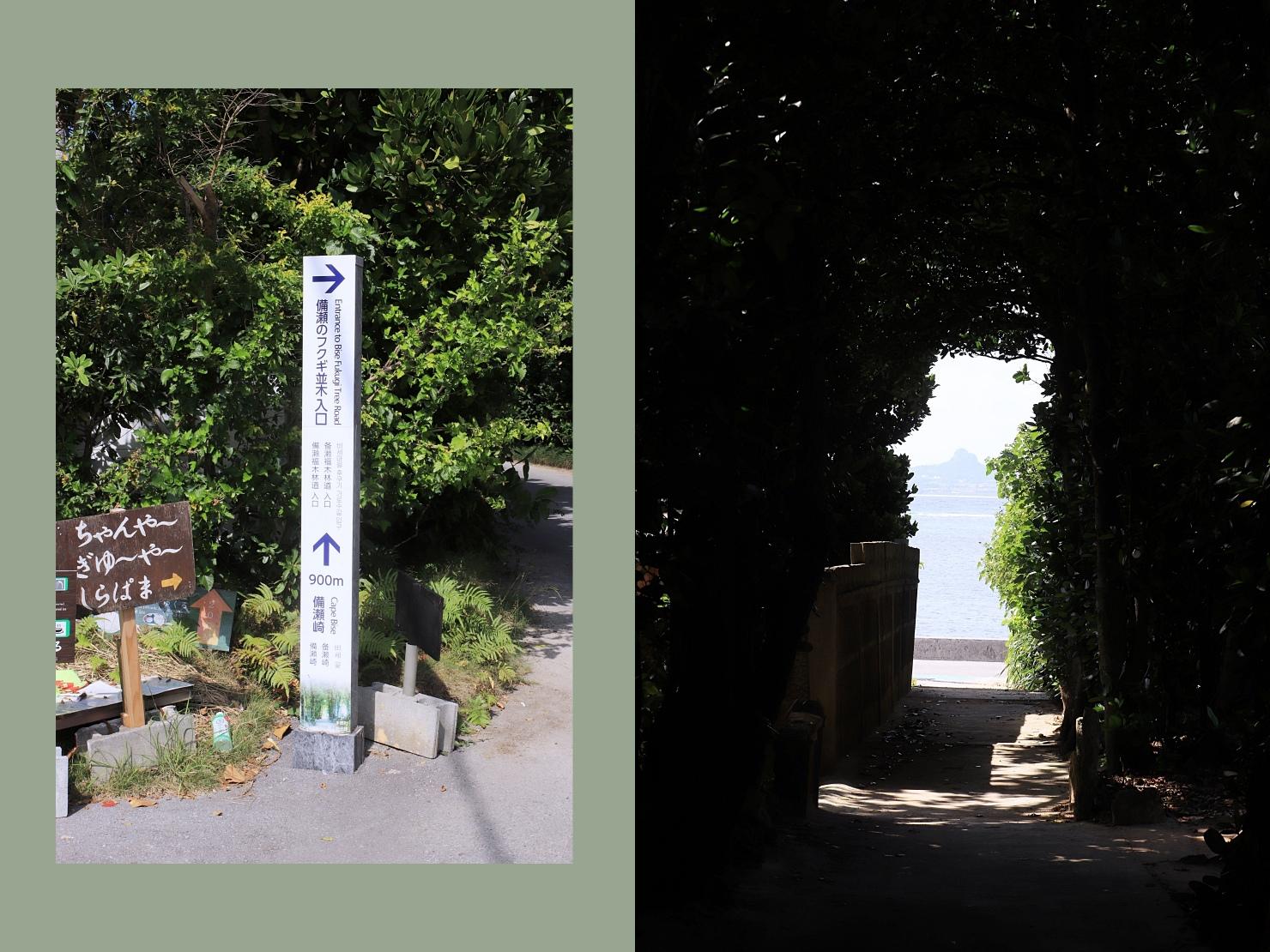 備瀨福木林道(備瀬のフクギ並木)
