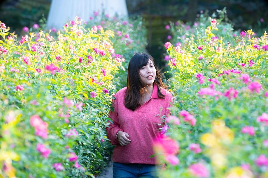 漫步玫瑰月季。攝影/李文欽