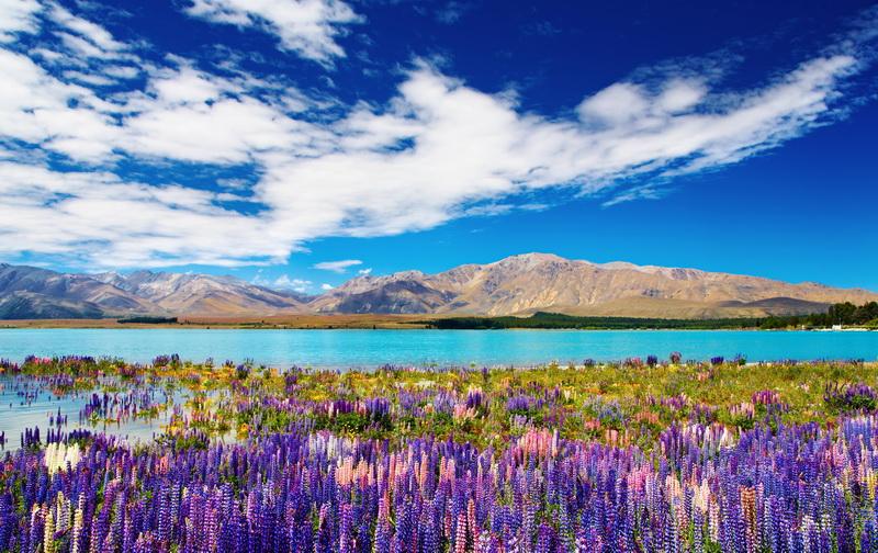 圖/紐西蘭