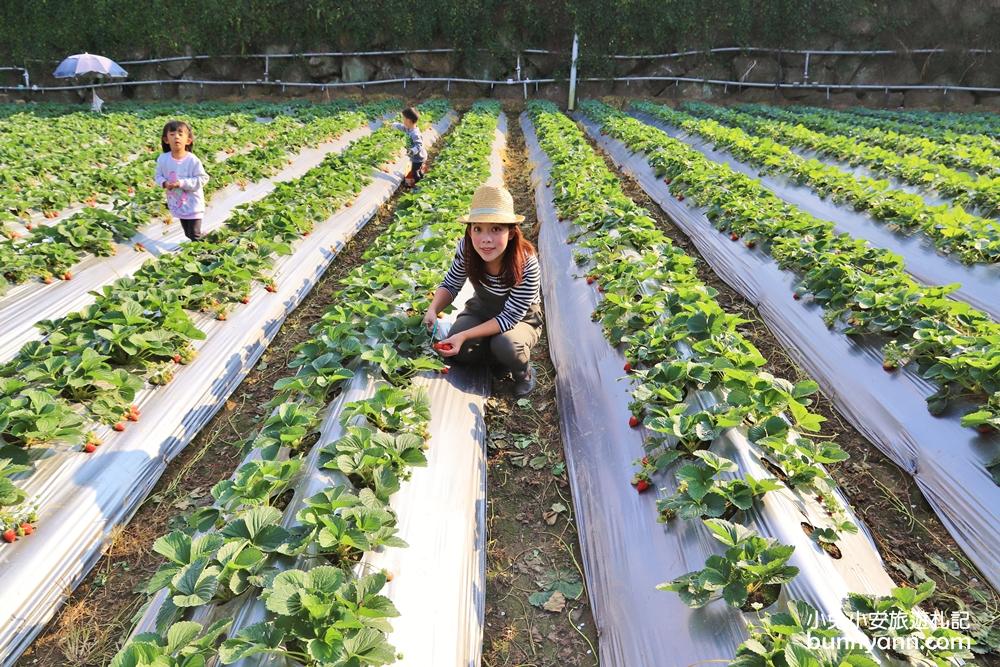 大湖草莓季