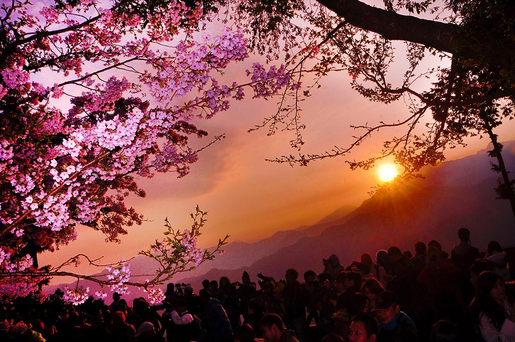 阿里山日出、雲海、晚霞、森林、登山森林鐵路並列五奇絕景。圖/觀光局