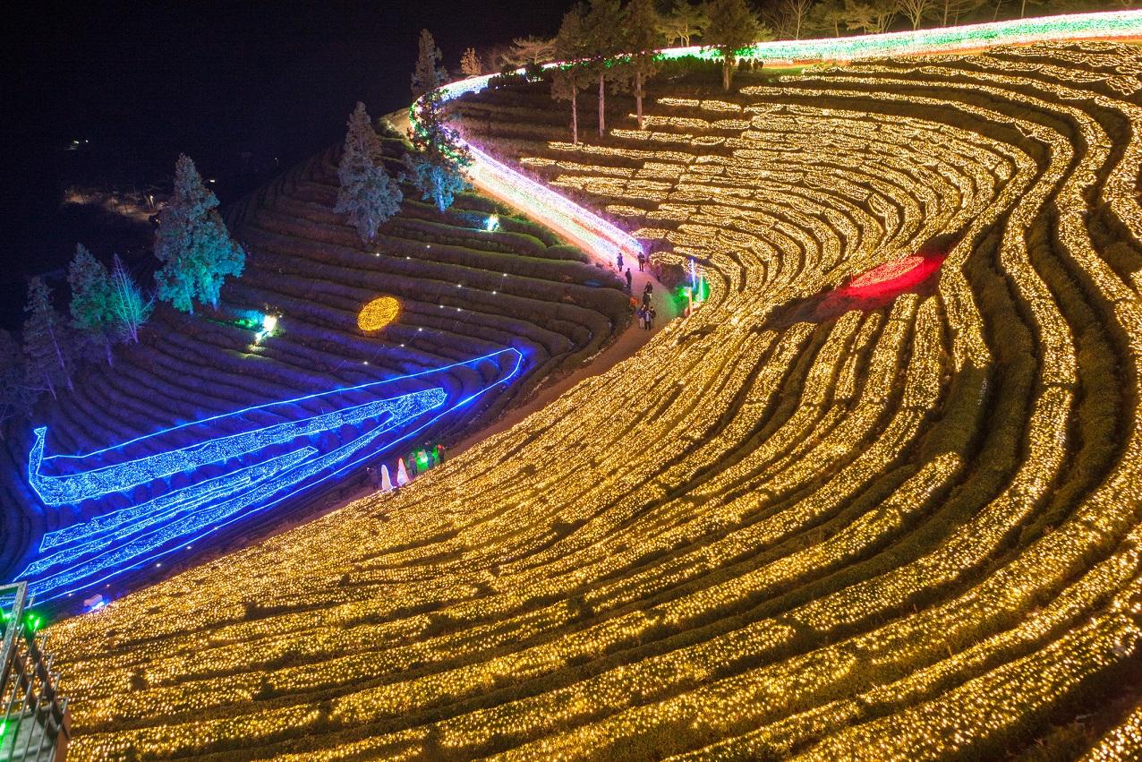 ▲寶城茶園燈節(圖/韓國觀光公社)