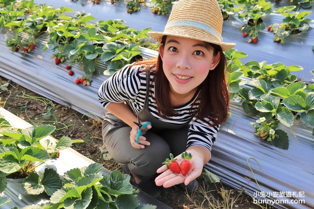 苗栗大湖採草莓一日遊