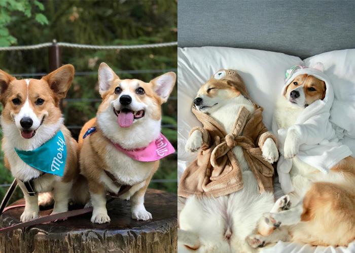 來自波特蘭的Maple和Morty是真正的姐弟,雖然有著血緣關係,不過他們有著截然不同的個性!