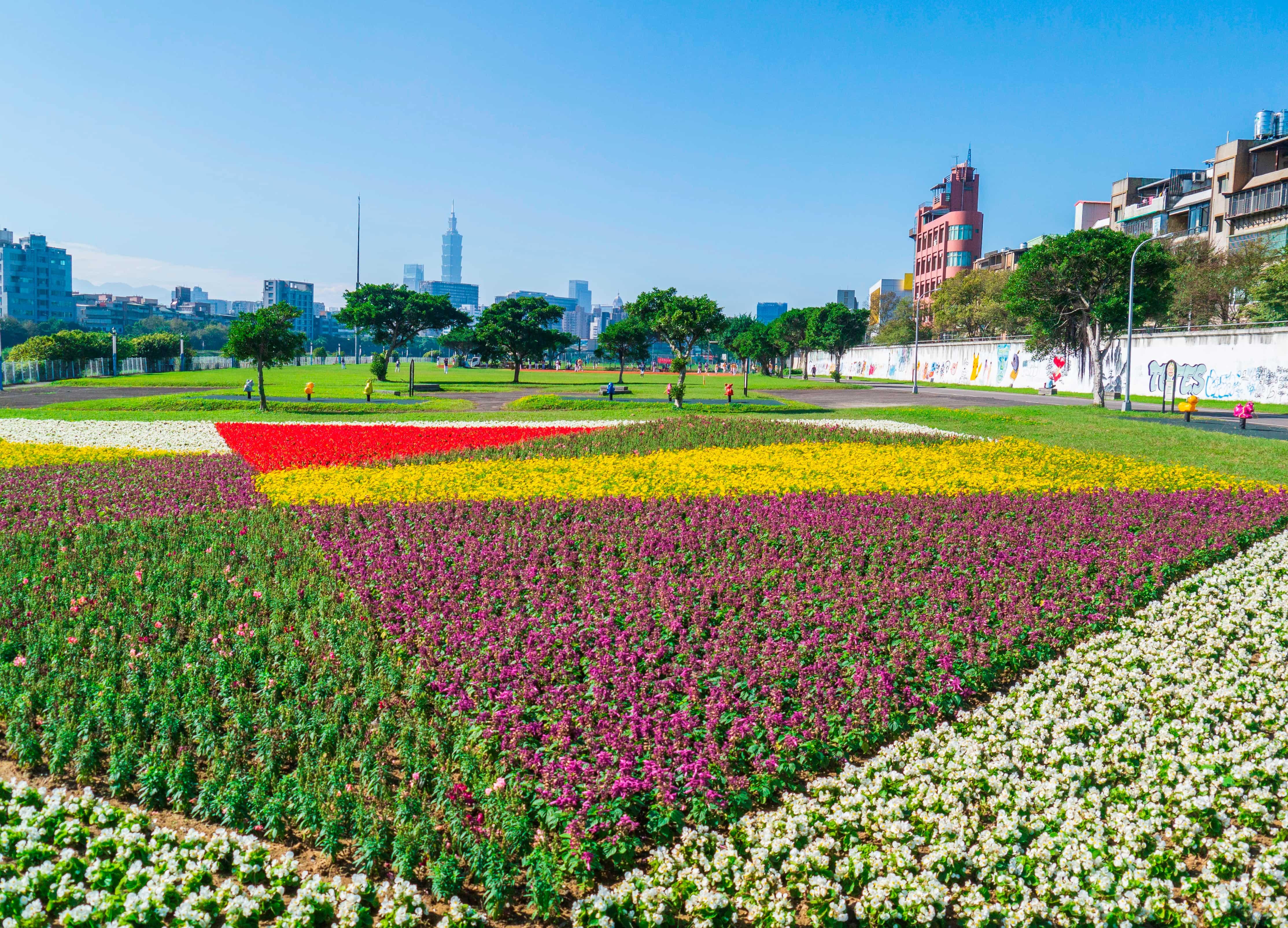 成美右岸河濱公園繽紛浪漫的花毯,種植面積加總約542坪,到明年2月都有花可賞。圖/台北市政府工務局水利工程處