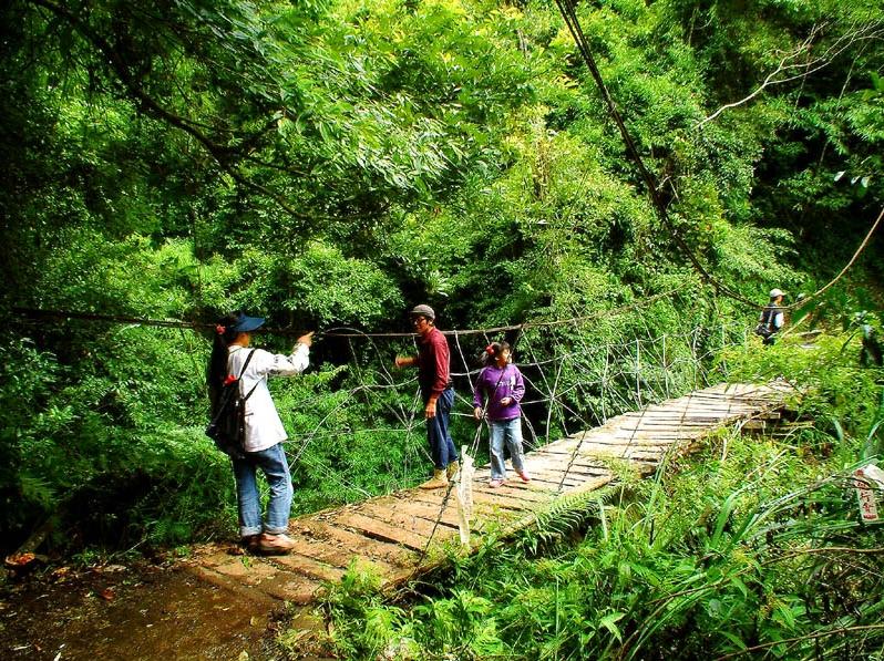 霞喀羅步道中海拔地區擁有豐富生物相,一路上柳杉、竹林、楓香遍布。圖/觀光局