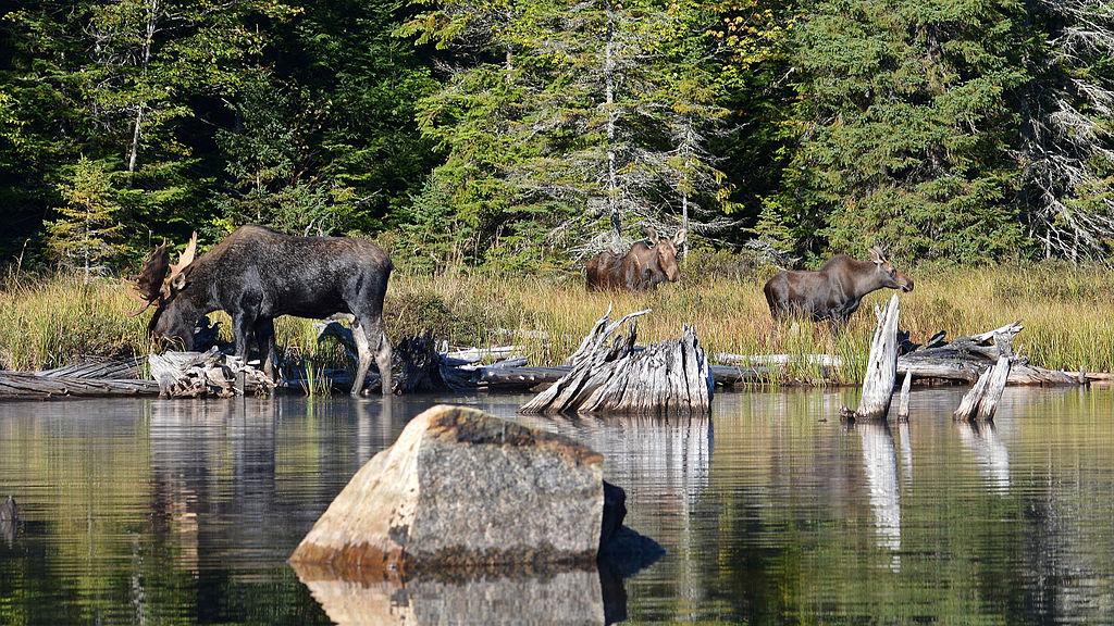阿爾岡昆省立公園 (Photo by Ryan Hodnett, License: CC BY-SA 4.0, Wikimedia Commons提供)