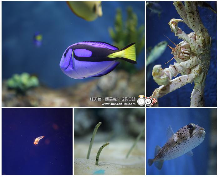 6間超有特色的日本水族館