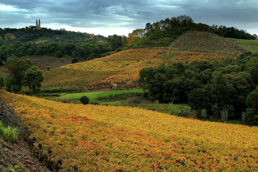 葡萄園谷 (Photo by Germano Roberto Schüür, License: CC BY-SA 4.0, Wikimedia Commons提供)