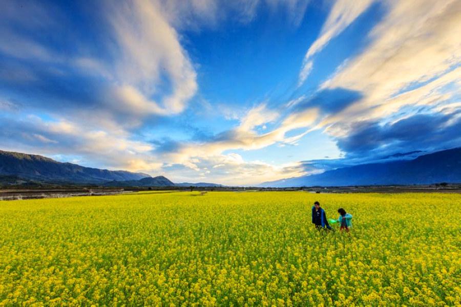 縱谷花海(圖片來源:萬物糧倉大地慶典網站)