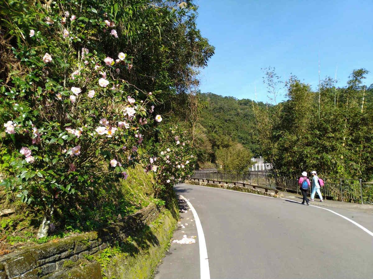 金瓜寮自行車道為賞花路線(圖片來源:坪林區公所)