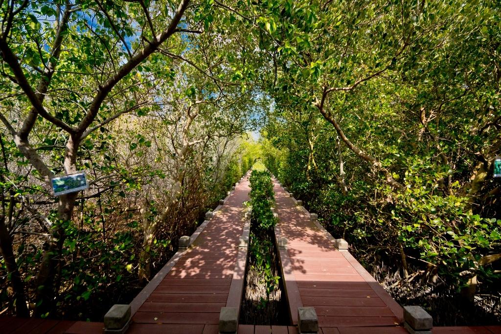 雙春濱海遊憩區設置南北兩條木棧道,穿梭於紅樹林與防風林交錯的水域之間,可以近距離接觸濕地生態。圖/雲嘉南濱海國家風景區