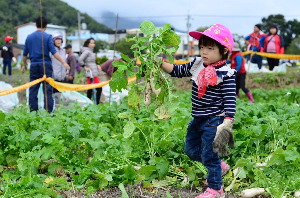 關山蘿蔔季(圖片來源:萬物糧倉大地慶典網站)