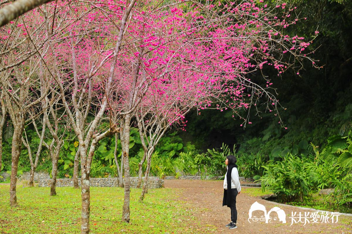 宜蘭10處賞櫻秘境