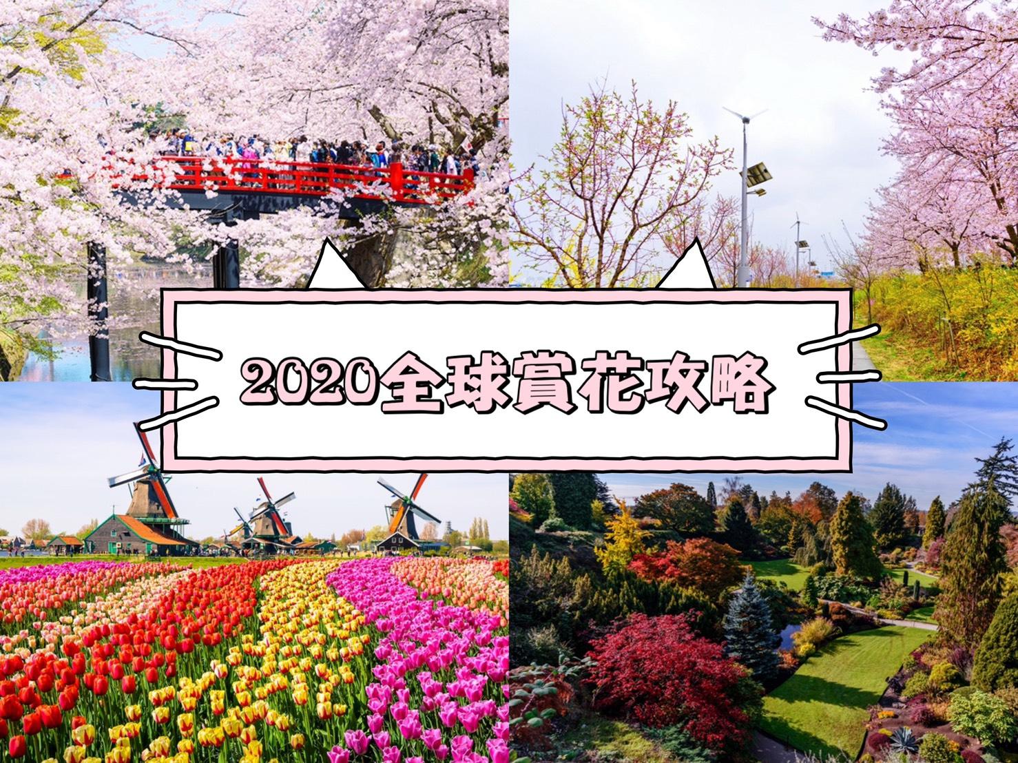 圖/2020賞花最前線大公開!!