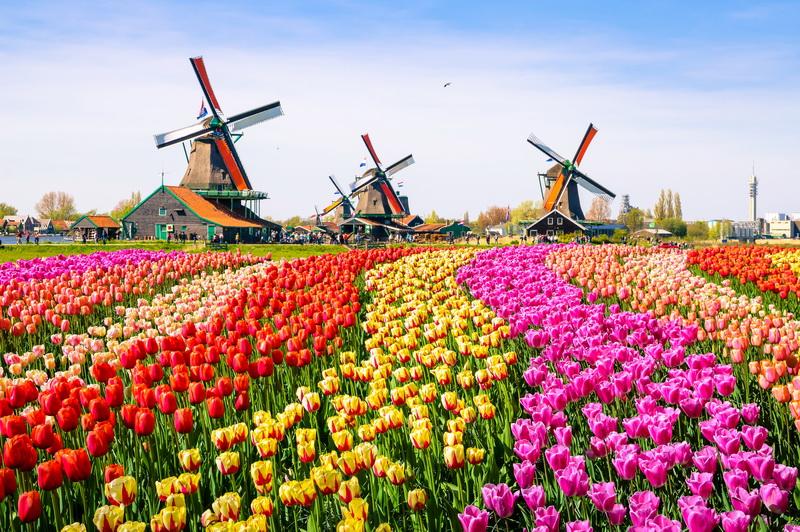 圖/荷蘭庫肯霍夫公園百萬朵花海齊放,來荷蘭一定要與鬱金香見一面!