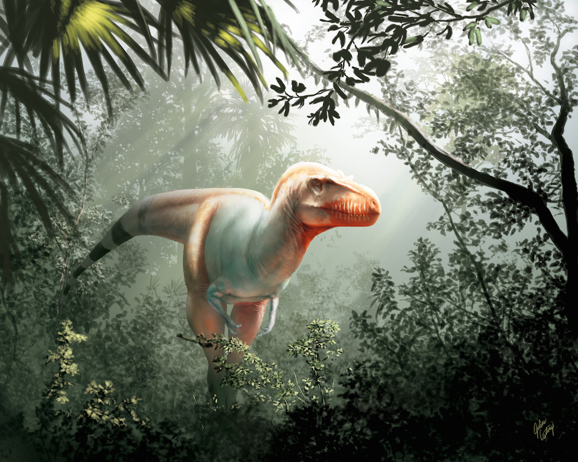 An artist's impression of the newly discovered dinosaur (Picture: Julius Csotonyi/Royal Tyrrell Museum of Palaeontology)