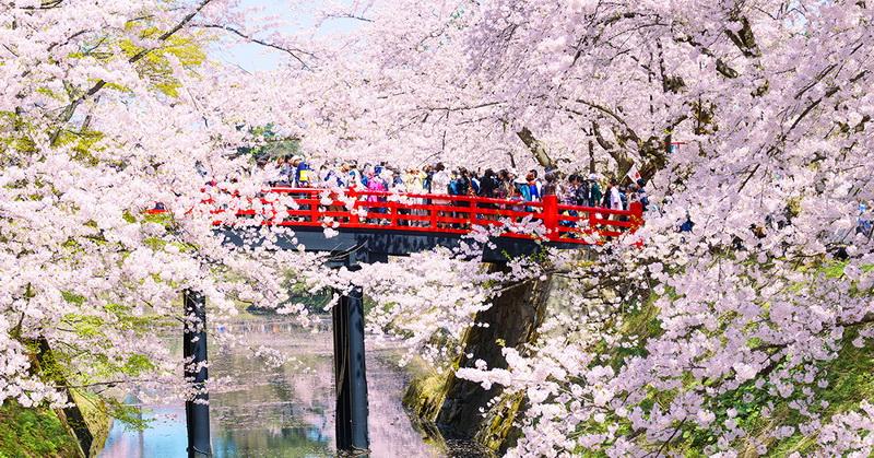 圖/日本東北弘前公園,那片花吹雪,讓你一輩子忘不了!