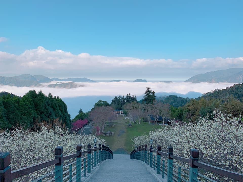 TWICE子瑜也來過!嘉義梅山白櫻秘境-寒溪呢森林人文叡地,穿越雲海上的櫻海踏上天國的階梯
