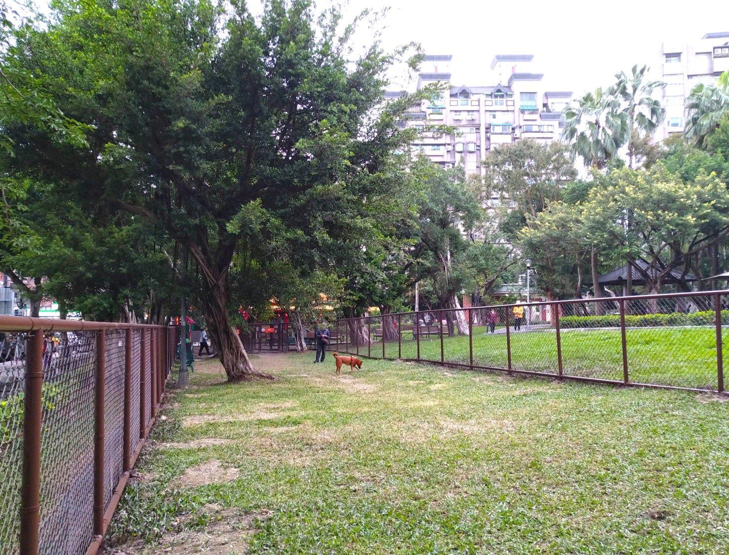 玉成公園狗活動區近期正式開放使用,大小型犬共用同一空間。圖/北市府動保處