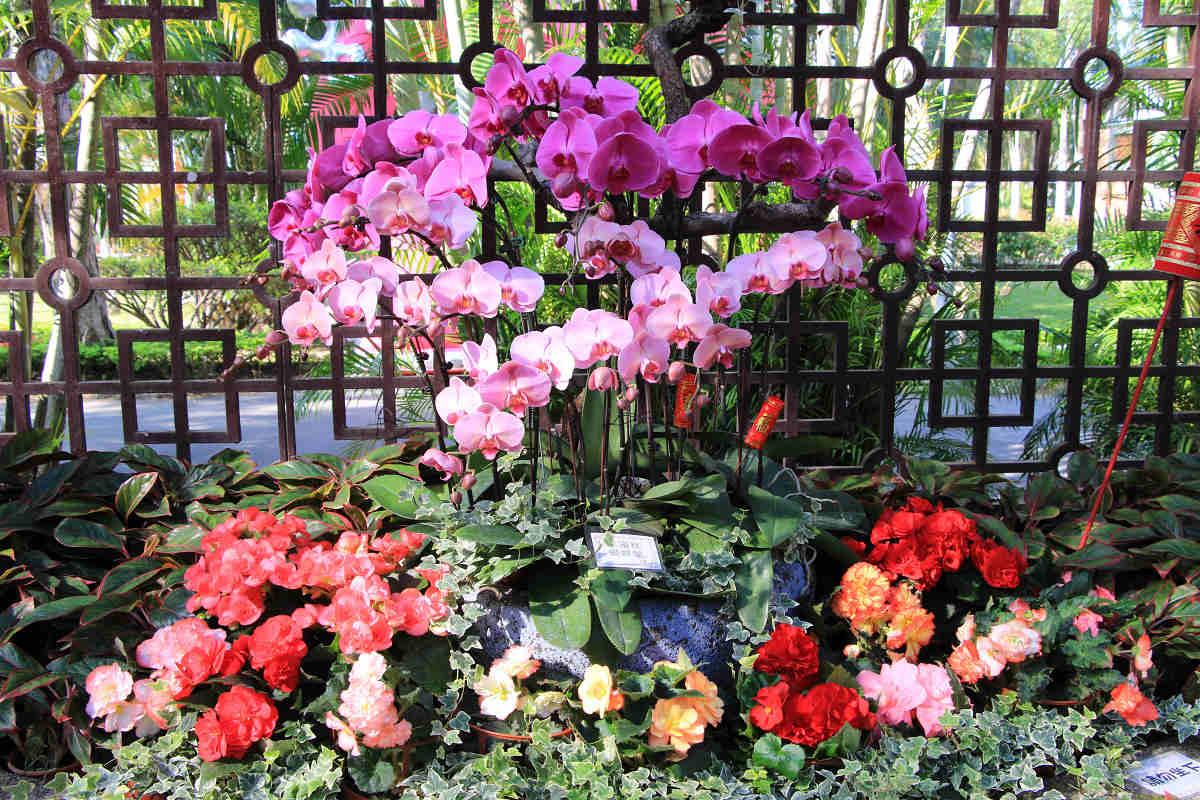 各式花卉呈現色彩繽紛燦爛的景緻(圖片來源:台北市政府工務局公園路燈工程管理處)