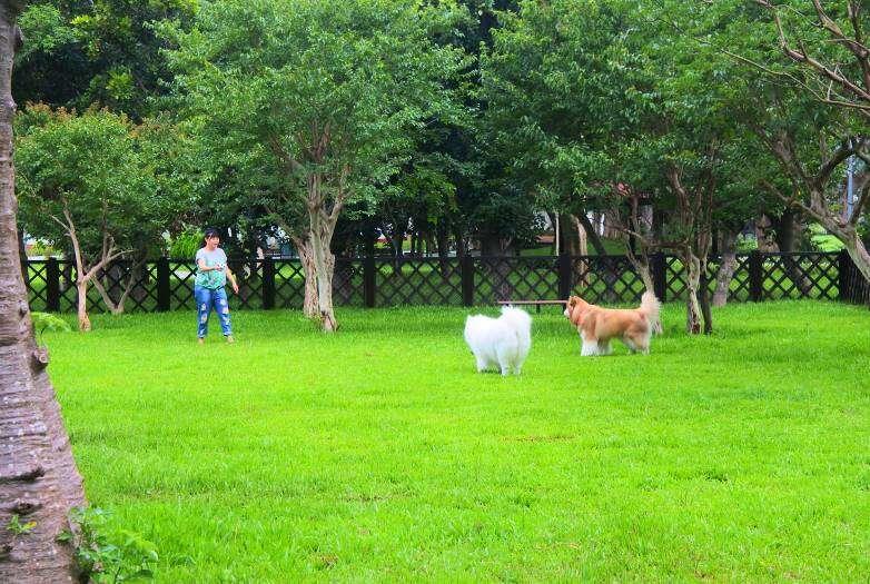 雙北的寵物公園逐漸增多,讓飼主在都市實現與毛小孩一起出遊的願望。圖/台北旅遊網