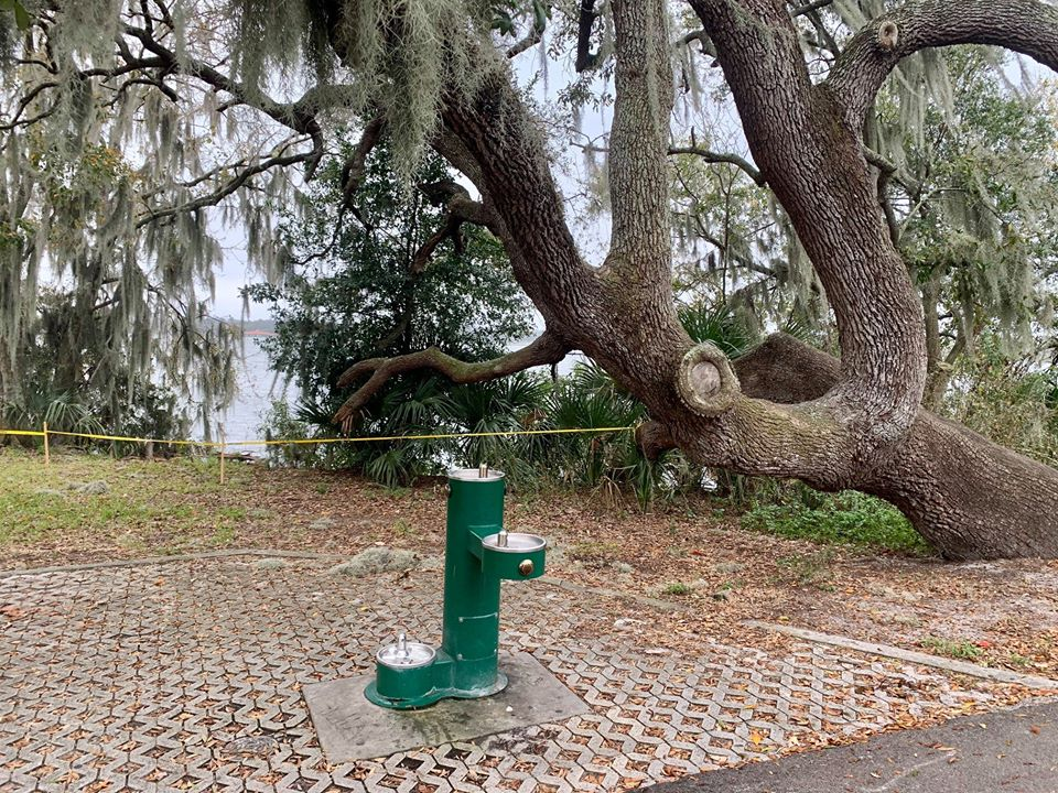 A group of snakes were observed having an orgy at a park in Florida. Source: City of Lakeland Parks & Recreation/Facebook