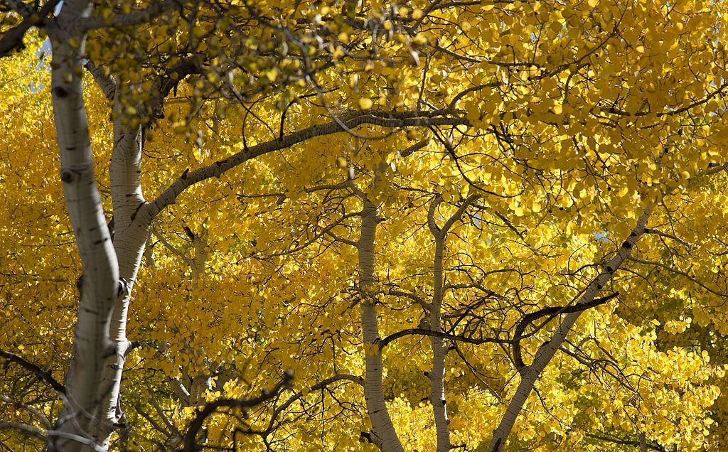 凱伯勒隘口 (Photo by U.S. Geological Survey, License: CC BY 2.0, 圖片來源www.flickr.com/photos/27784370@N05/14656837218)