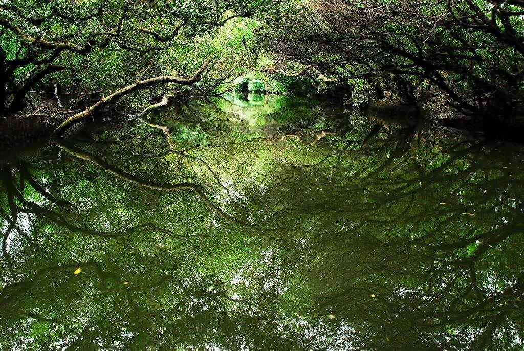 四草綠色隧道(圖片來源:台南市政府)