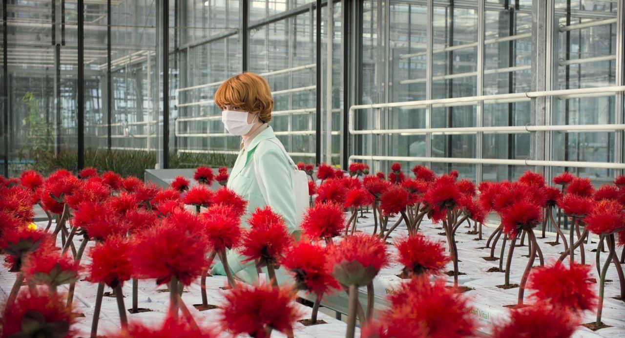 《小魔花》片中人工培植的新品種花卉能帶讓大腦產生快樂的感覺,卻也隱藏著戴上口罩才能防範的潛在危機,劇情設定意外符合社會現況。