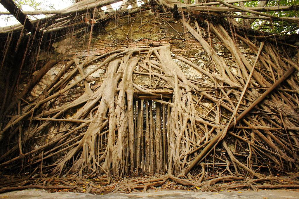 台南安平樹屋 (Photo by Mk2010, License: CC BY-SA 4.0, Wikimedia Commons提供)