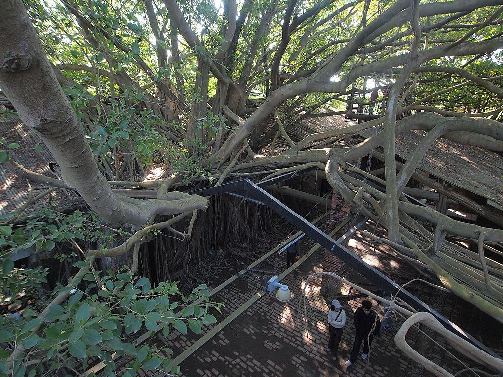 台南安平樹屋 (Photo by rheins, License: CC BY 3.0, 圖片來源web.archive.org/web/20161024152403/http://www.panoramio.com/photo/78997311)