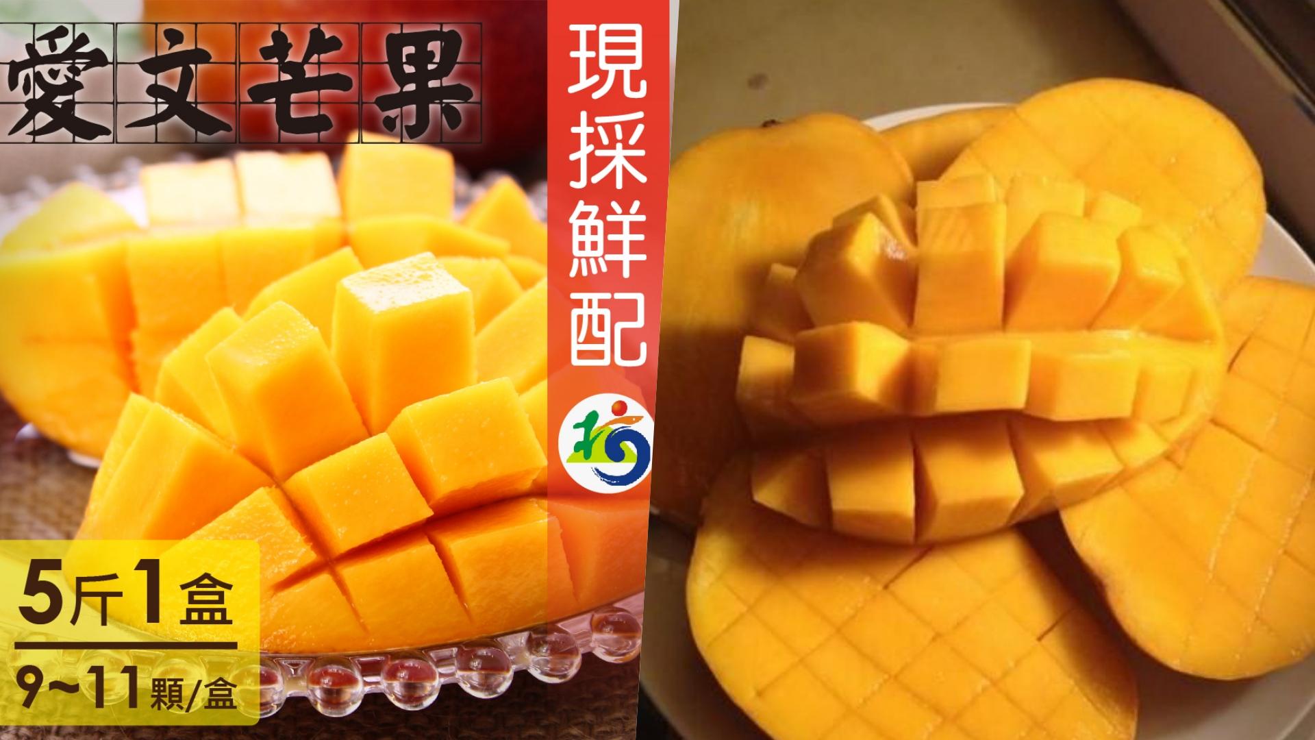屏東枋山陽光充足溫度又高,因此種出來的芒果總是又大又甜,加上不使用化學肥料的自然農法,吃起來也很安心!