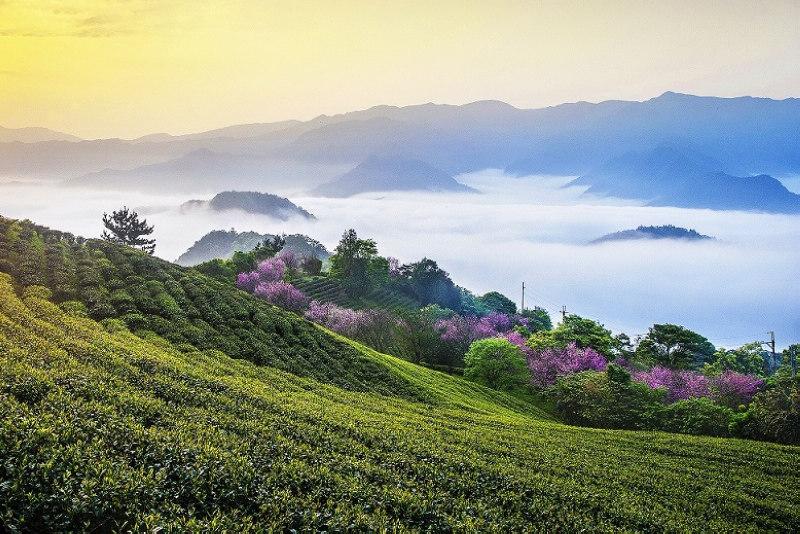 茶園仙境(圖片來源:坪林區公所)