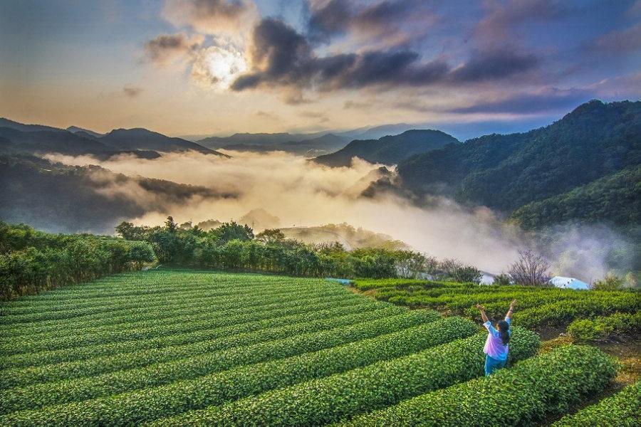 茶鄉早安(圖片來源:坪林區公所)