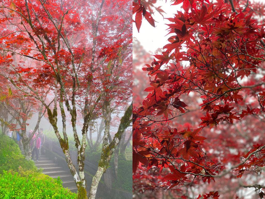 宜蘭太平山~夏天專屬的山林紅葉秘境